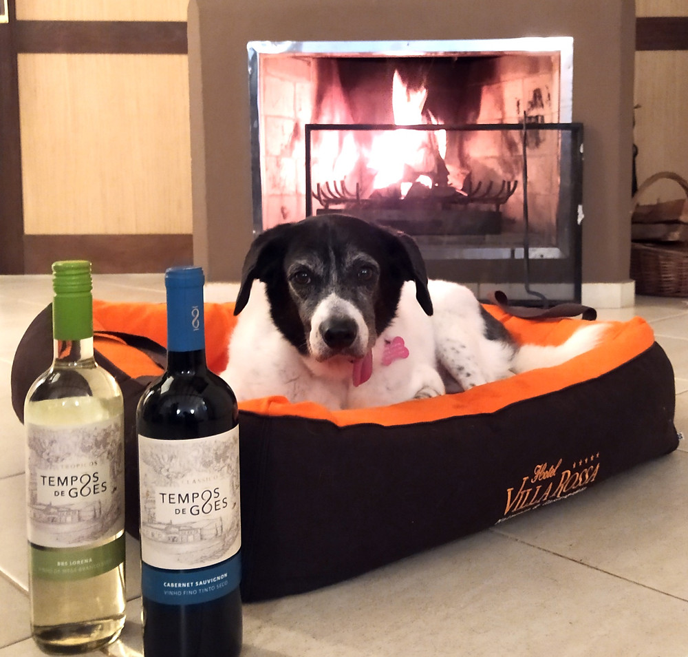 villa rossa pet friendly, cachorro e vinhos