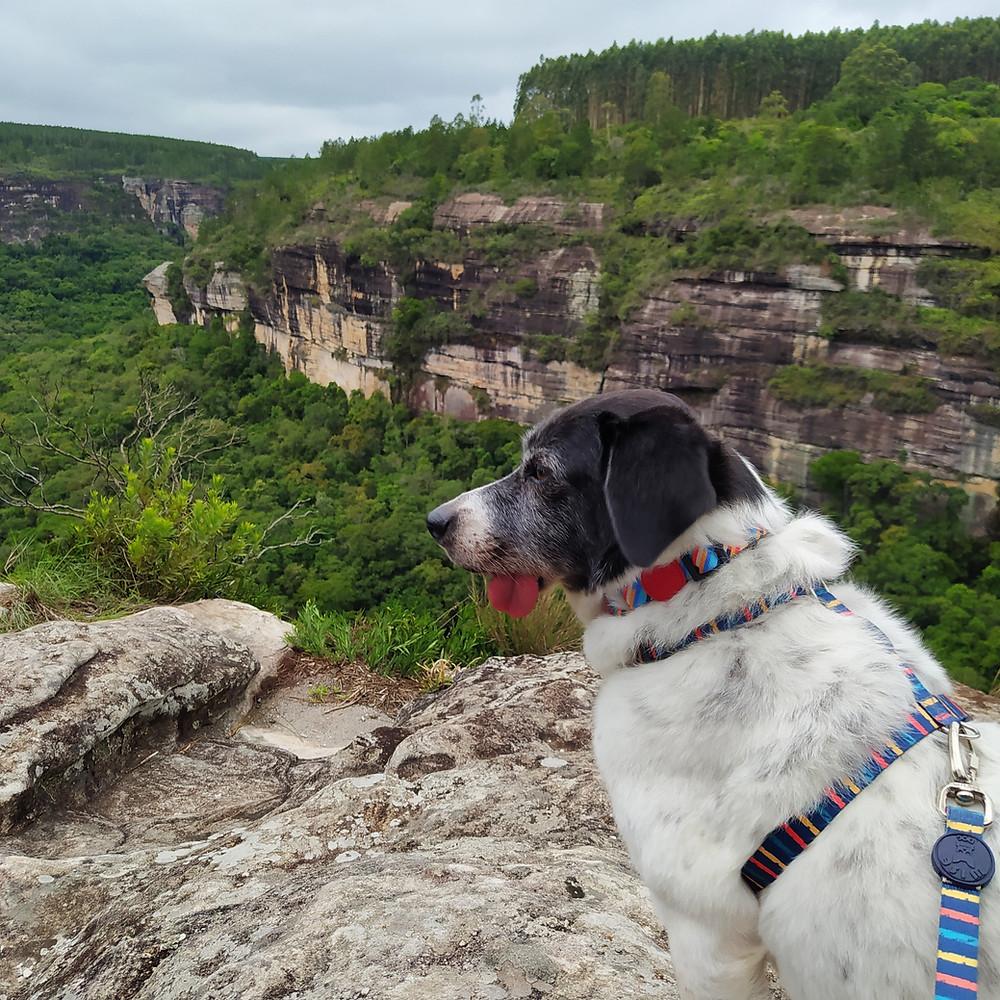 cãnion jaguaricatu, pet, pet friendly, viajando com cachorro, sengés, trilha