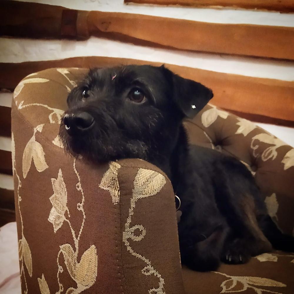 pousada pet friendly, pegada da onça, tapirai, cachoeira, mata, trilha pet, dog, cachorra
