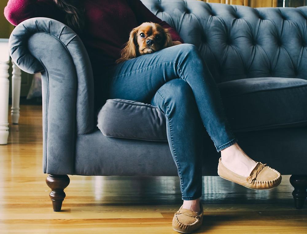 cachorro no colo, sofá, pet