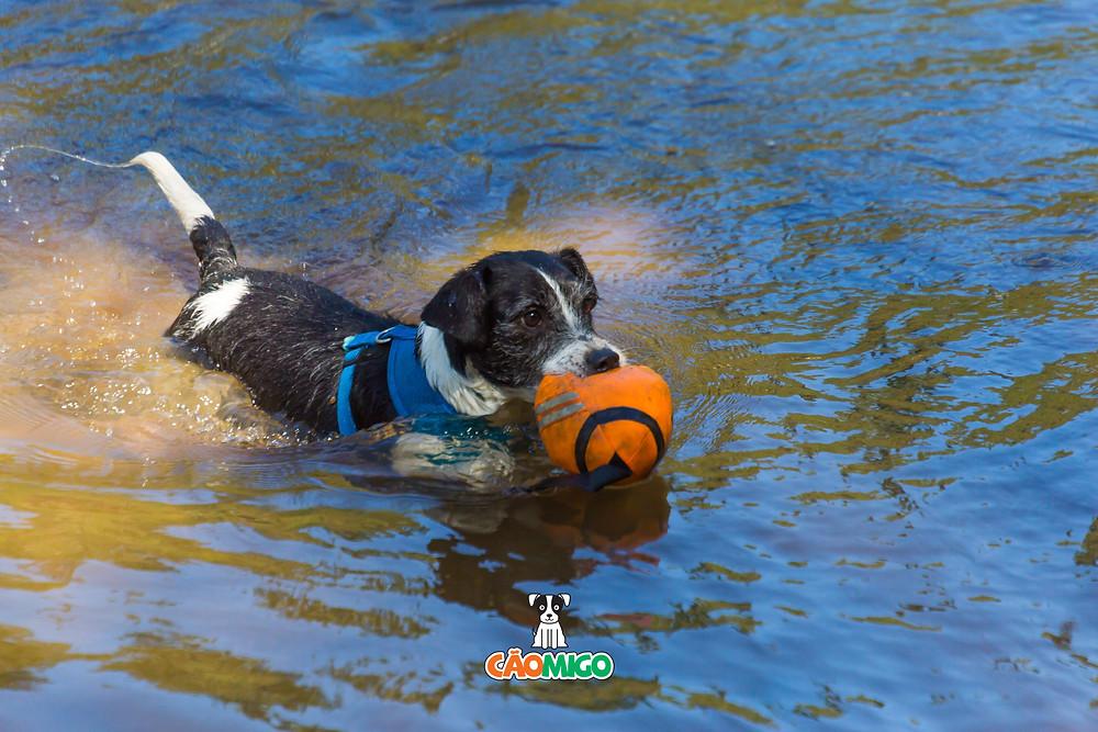 Bob, cãomigo, cachorro nadando, pet friendly, cachorro vira-lata