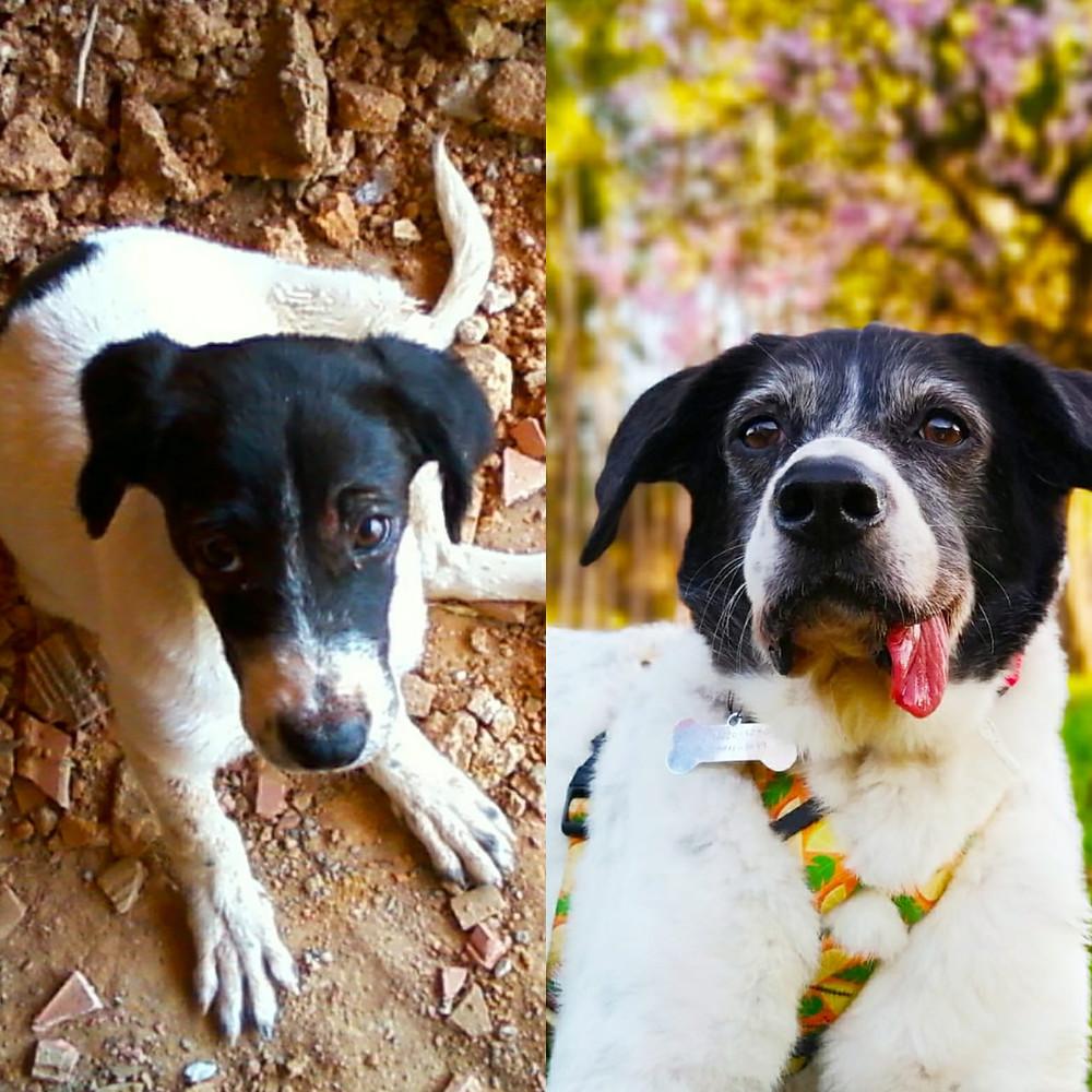 antes e depois, adoção, adote, adotei, adotada, cinomose