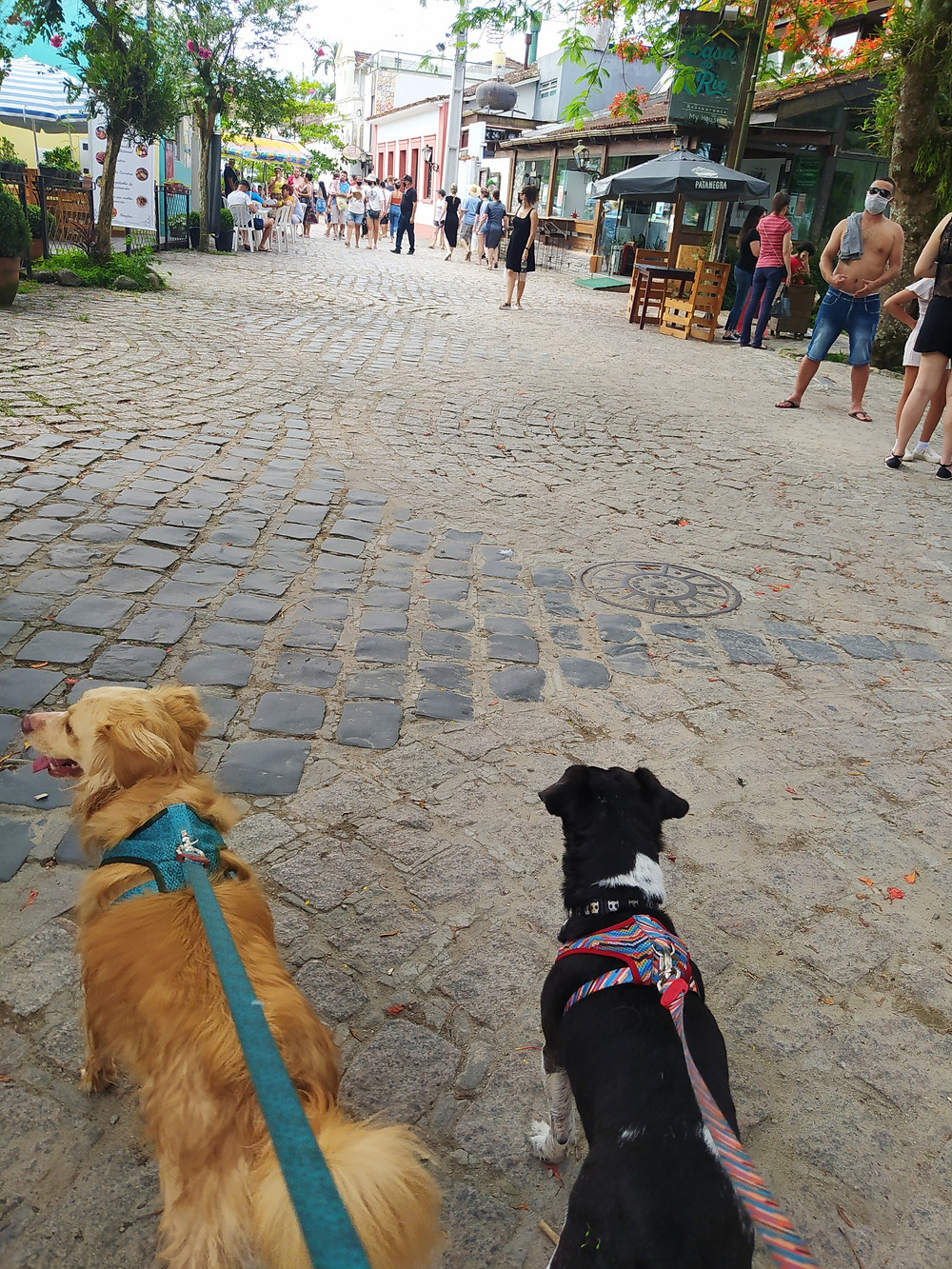 passeio com cachorro, passear com cachorro, cachorro passeando