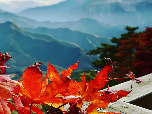 11月7日(土)「まったり♪ハイク」秩父・丸山〜日向山