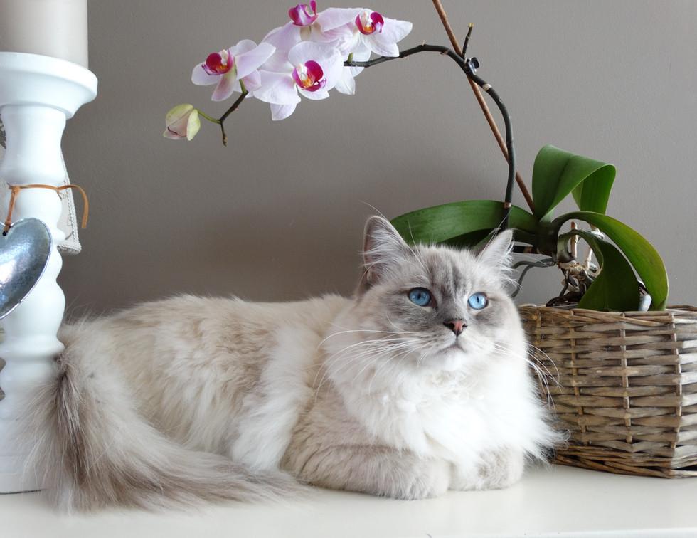 adorable-animal-basket-breed-208773.jpg