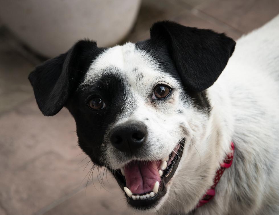 short-coated-white-and-black-dog-1404727
