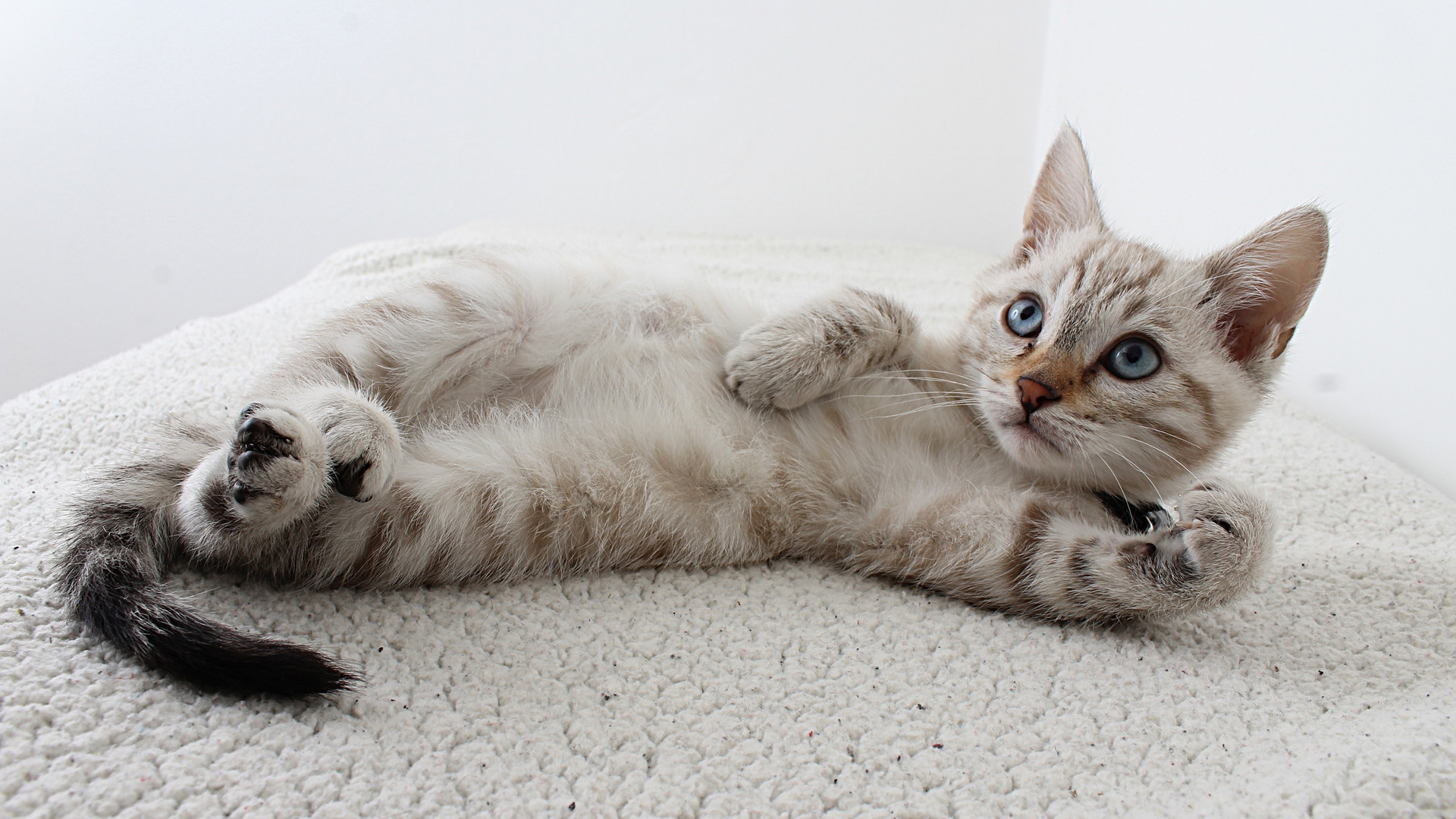 photo-of-grey-tabby-kitten-lying-down-25