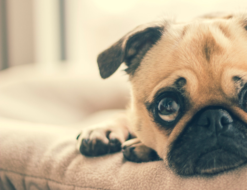 adorable-animal-breed-canine-374906.jpg