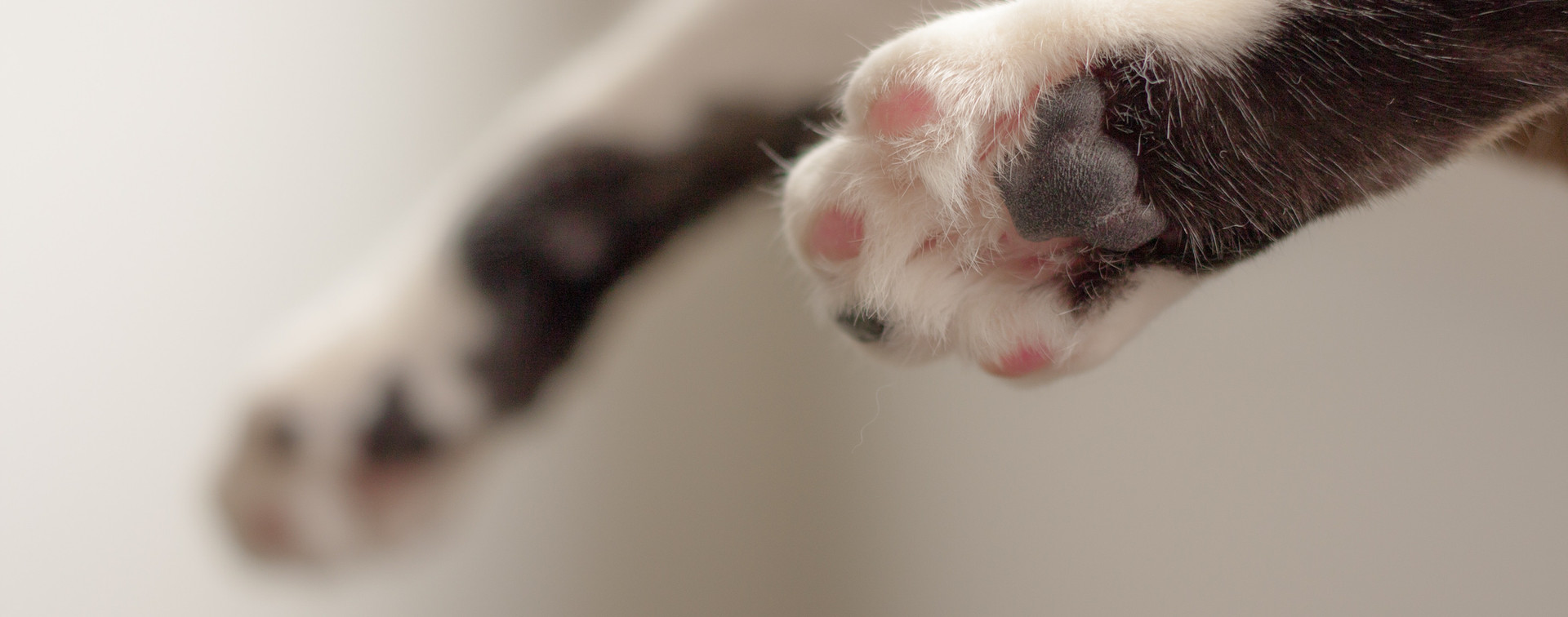 cat-paws-in-shallow-focus-photography-90
