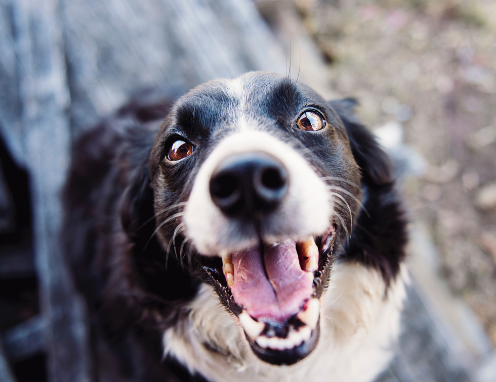 animal-blur-canine-close-up-551628.jpg