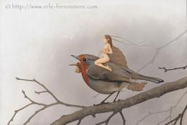La fée sur le rouge-gorge © Erlé Ferronnière