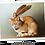 Thumbnail: La fée sur le chat roux