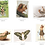 Thumbnail: Pack cartes postales n°2