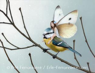 La fée sur la mésange bleue © Erlé Ferronnière