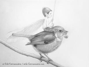 Le pixie sur le rouge-gorge (dessin - détail) © Erlé Ferronnière