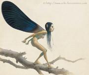 La fée aux ailes de calopteryx © Erlé Ferronnière