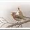 Thumbnail: Le fée sur le rouge-gorge
