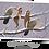 Thumbnail: Les fées et les oiseaux