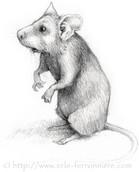 Le lutin hamster © Erlé Ferronnière