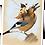Thumbnail: Le pixie sur le geai