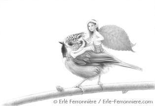 La fée sur la mésange huppée (dessin) © Erlé Ferronnière