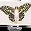 Thumbnail: La fée papillon