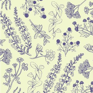 botanist illustrations-02.png