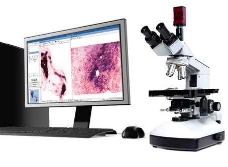 Feasibility of Using the Panoptiq Imaging System for Telemicrobiology