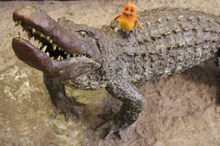 Peep & the Crocodile