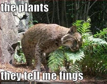 funnyplants.jpg