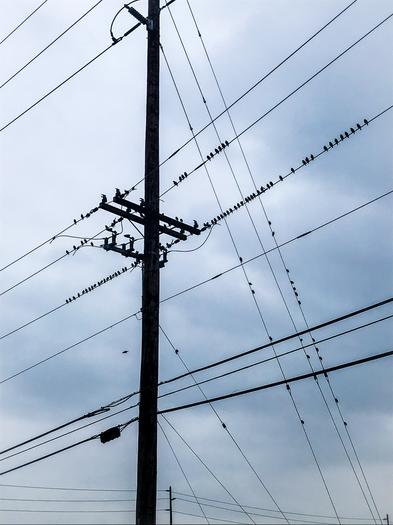Birds of Bellingham