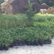 Plant Supply & Planting