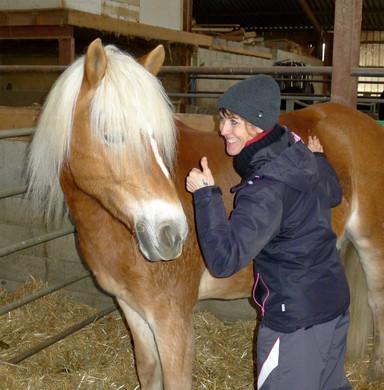 horses & dog 1.jpg