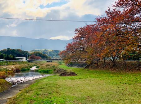 晩秋の金生川