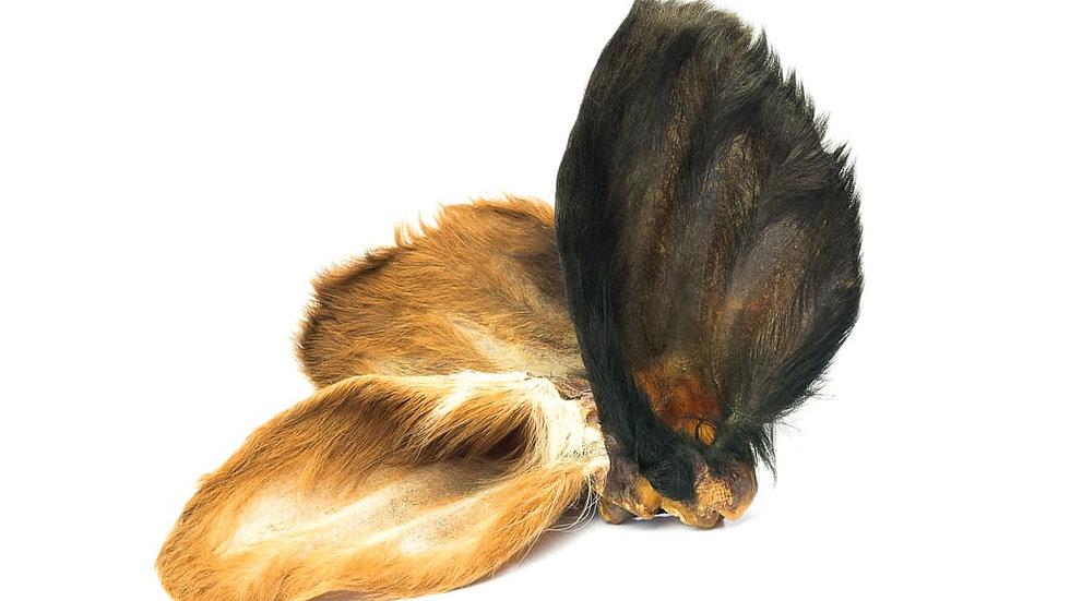 Hairy cow ear