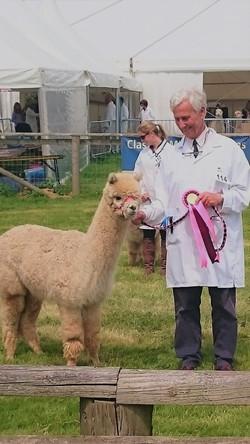 Nico at Devon County Show With Alpaca