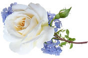 flowers-4860887_1920.png