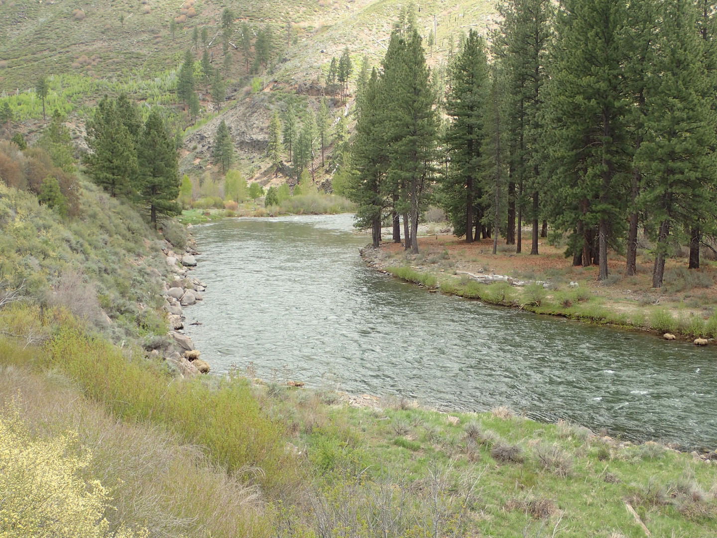 Fly Fising on The Middle Truckee