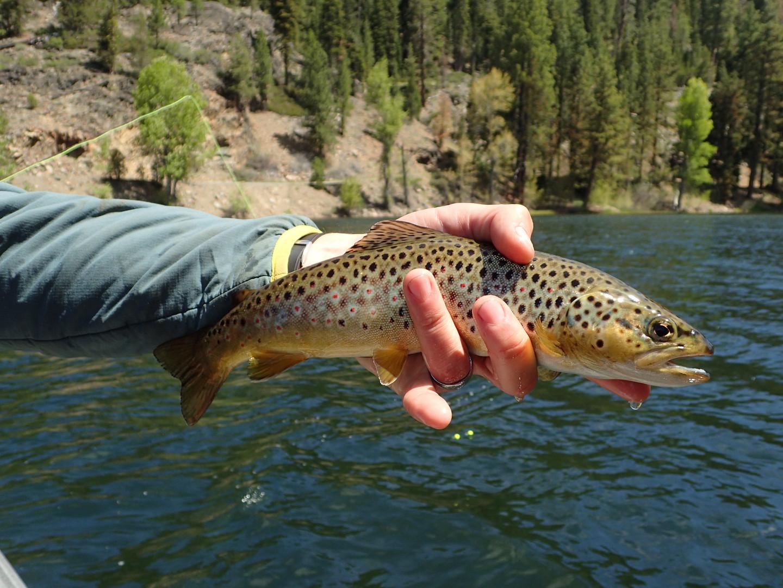 Milton Brown Fish