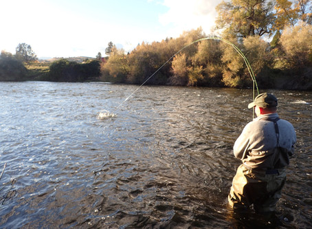 Truckee River Fly Fishing Report October 24, 2018