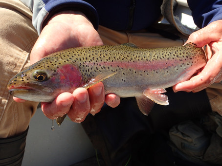 Truckee River Fly Fishing Report November 24, 2018
