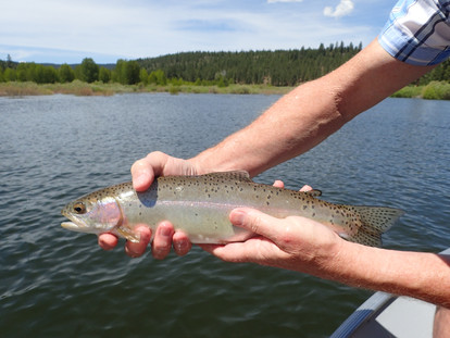 Rainbow Fish Caught at Stampede