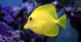 marine-fish-clipart-underwate-fish-67601