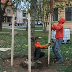 Kotvení stromů