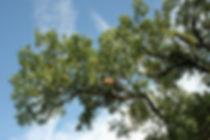 Péče o stromy Rakovník