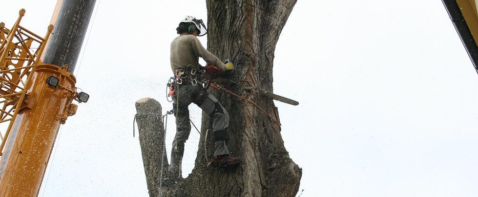 Kácení stromů s jeřábem