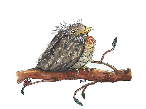 Baby Bird Robin watercolor art print