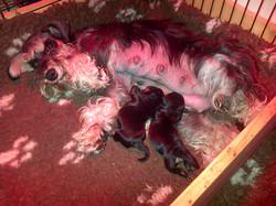 premiers jours de vie pour les bébés