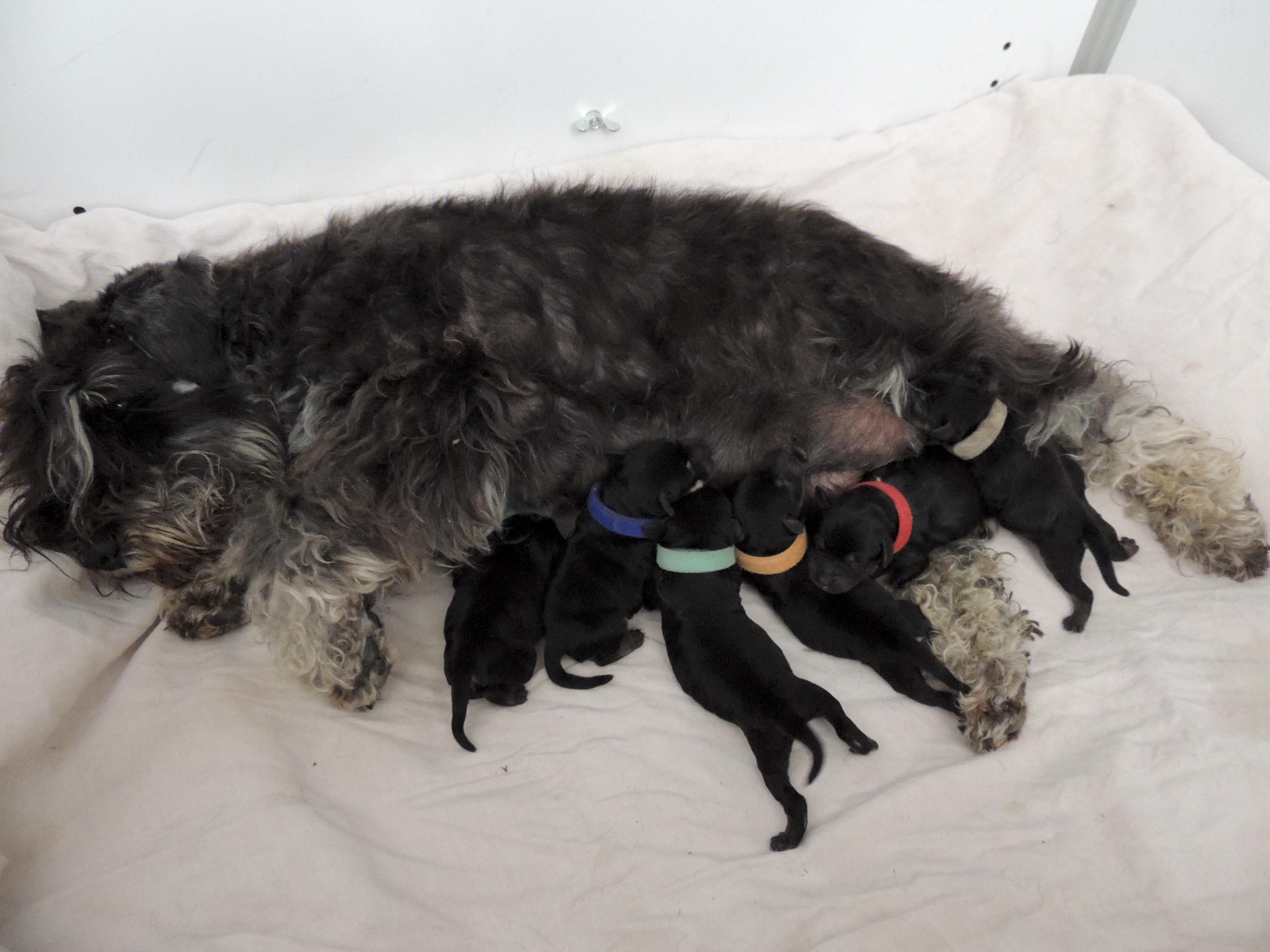 Nashi et ses bébés