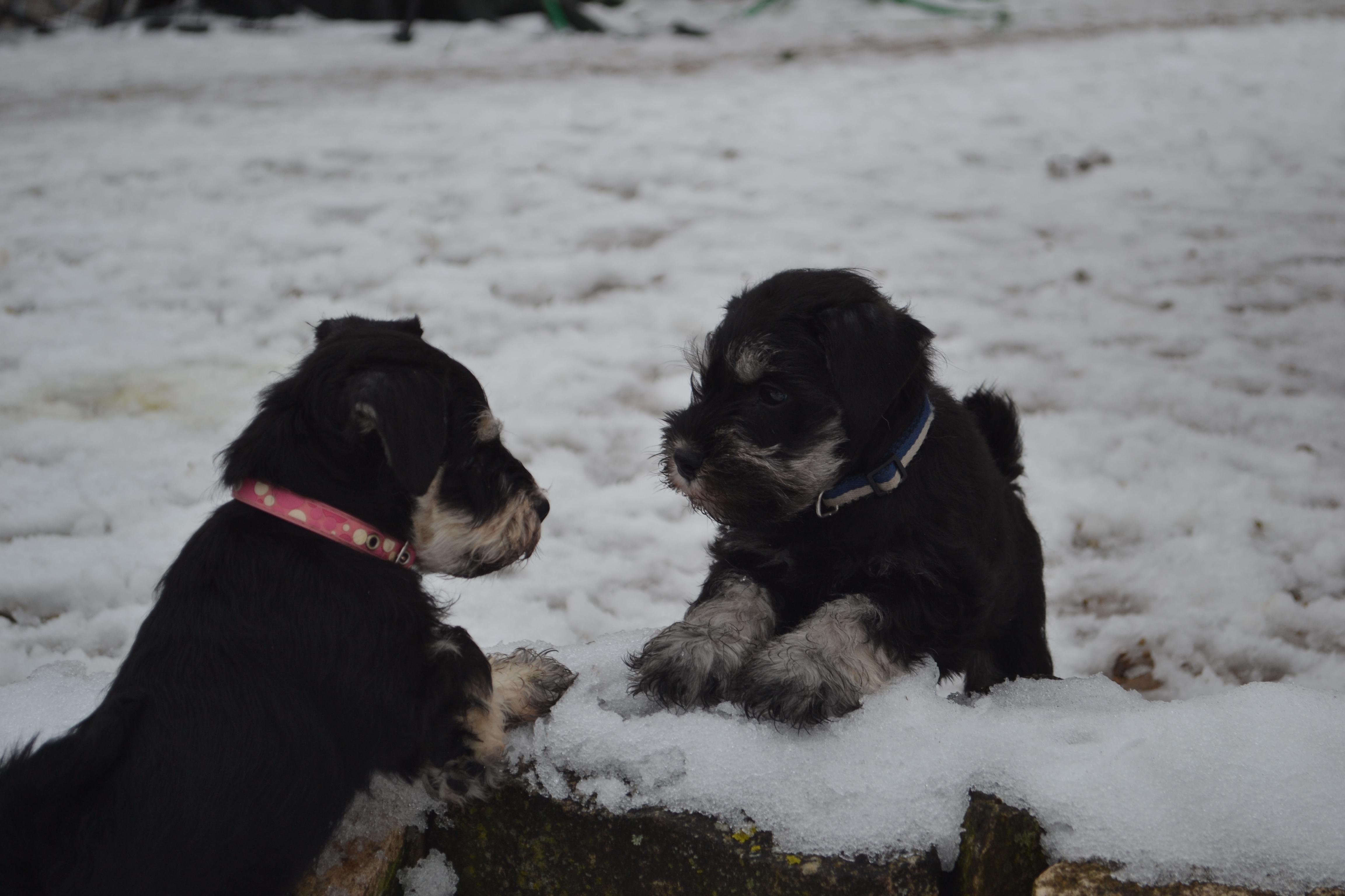 Jeux dans la neige